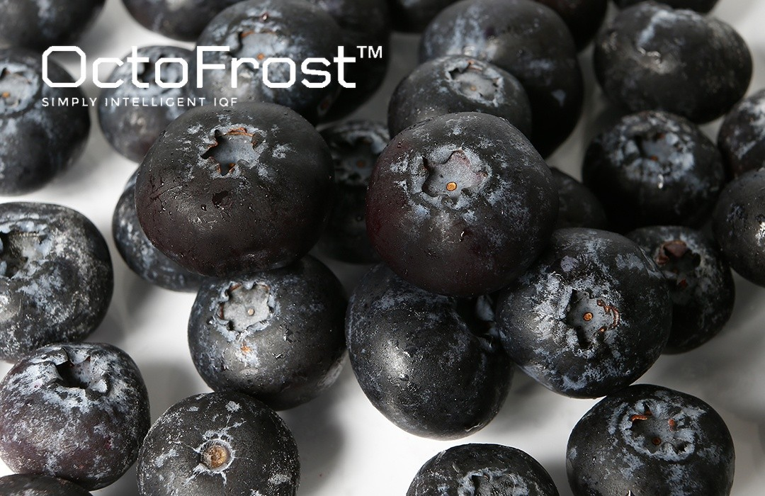 IQF BLUEBERRIES AND COMMON CHALLENGES FOR BLUEBERRY PROCESSORS