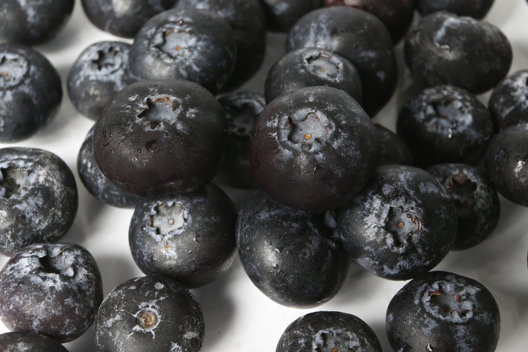 GBC PART 3: BLUEBERRIES - THE PERFORMING STAR