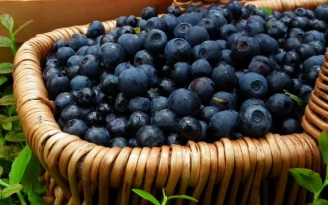NEW TRENDS ON THE FROZEN FOODS MARKET: IQF BILBERRIES