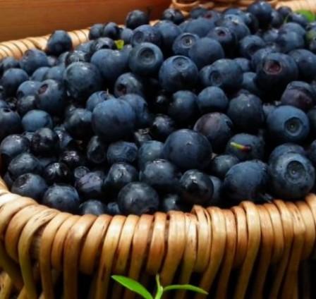 NEW TRENDS ON THE FROZEN FOODS MARKET: IQF BILBERRIES